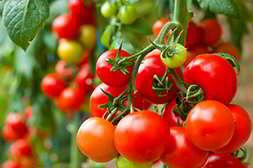 Благодаря агромаксу качество урожая повышается