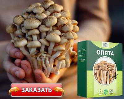 Домашняя грибница купить на официальном сайте