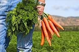 С Агроплантом урожайность подымается в 2 раза