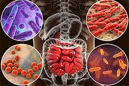 Лекарство Мицеликс обладает свойством останавливать размножение болезнетворной микрофлоры
