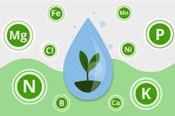 Удобрение Гардемакс ускоряет рост растений.