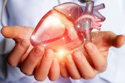 Эффект Джавимакса в укреплении сердечно-сосудистой системы.