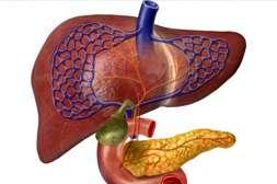 С лекарством Диабеталь выводятся шлаки и токсины.