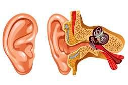 Состав Отивита предотвращает сужение слуховых путей.
