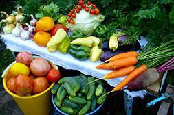Агрохелс подходит для всех сельхозкультур.