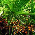 Растительные компоненты есть в составе Урофлекса.
