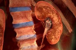 С препаратом Диабетик Форте регенерируют ткани.